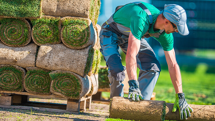 Gardener VS Landscaper. What's the Difference?