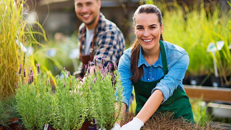 Starting a Landscaping Business in Australia